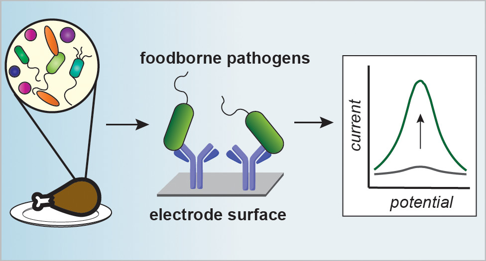 Electrochemical Sensors to Detect Bacterial Foodborne Pathogens