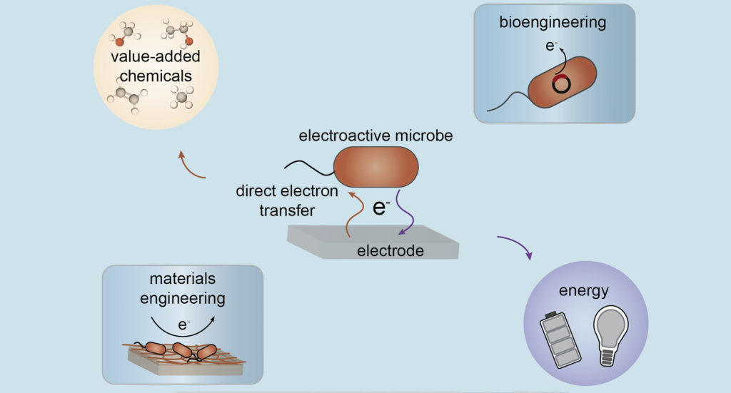 Engineering the interface between electroactive bacteria and electrodes