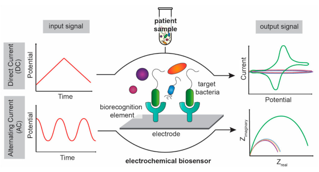Electrochemical Diagnostics for Bacterial Infectious Diseases