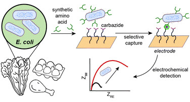 Covalent capture and electrochemical quantification of pathogenic E. coli