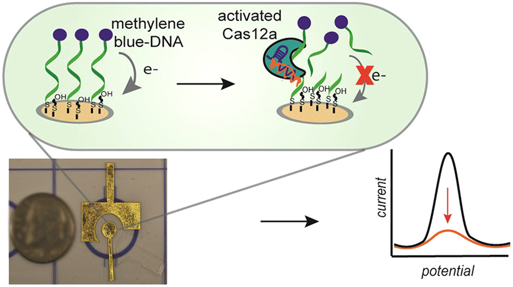 Electrochemical Strategy for Low-Cost Viral Detection