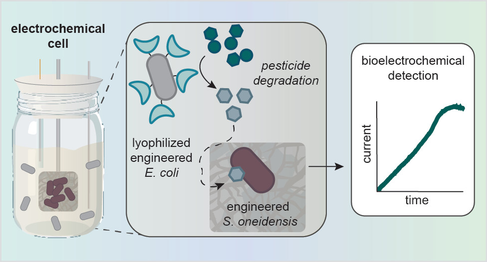 A Microbial Electrochemical Technology to Detect and Degrade Organophosphate Pesticides